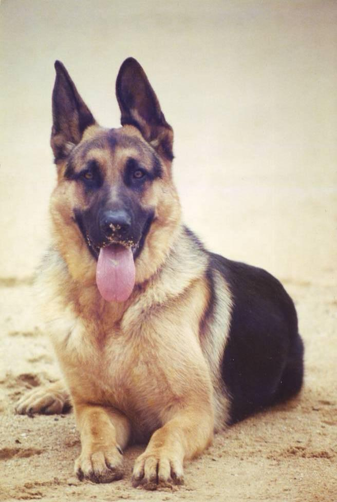 Sydney Dog And Cat Boarding Reviews